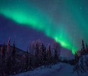 aurora borealis as seen above a snowed forest