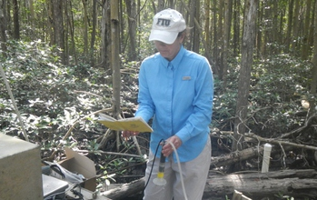 Hydrologist Rene Price in the Florida Everglades sampling water and looking at notes