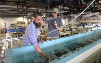 Researchers Joseph Looney and William Schroer maintain lab experiments on disease in oysters.