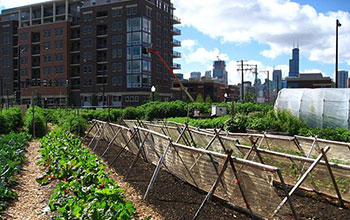 Food system changes may curb cities' environmental impacts.