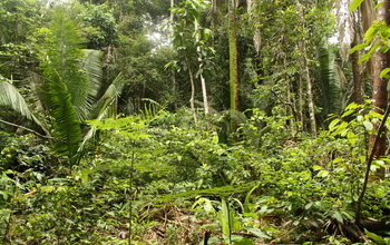 A view of tropical forest biodiversity 15 years after former pastures were abandoned.