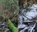 image showing side by side a stream in winter and in summer