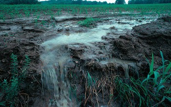 Soil and fertilizer runoff from a farm after heavy rains; such runoff can lead to algae blooms.