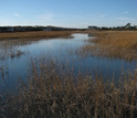 This good killifish habitat near New Bedford Harbor is relatively devoid of chemical pollution.