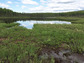 NSF Dimensions of Biodiversity grantees will study Campbell Lake and nearby peatlands in Alaska.