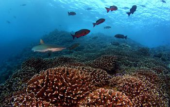Microbes surrounding coral reefs change in sync by day and by night, scientists have found.