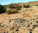 Titanosaur eggshell fossils at archaeological site