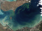 Lake Erie in October 2011, during an intense bloom of blue-green algae, or cyanobacteria.