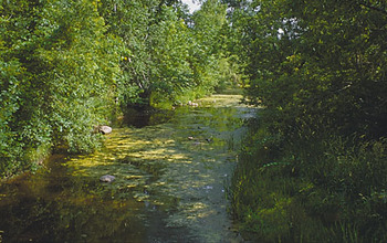 Algae blooms often occur in urban streams; excess nutrients lead to the blooms.