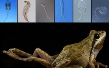 Illustration showing a diseased frog and various parasites