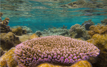 NSF Dimensions of Biodiversity scientists will look at coral reef ecosystems around the world.