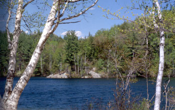 Photo of a northeastern lake with forest in the background and birch trees in the foreground.