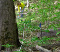Photo of a scientist sampling atmospheric nitrogen deposition from acid rain on the forest floor.