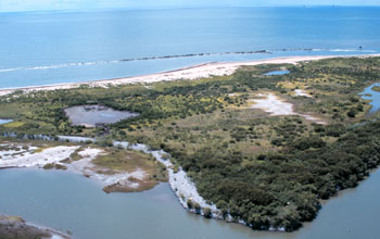 Organisms in estuaries, where rivers meet the seas, are affected by ocean acidification.