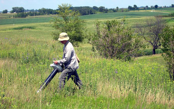 Image of entomologist Chris Dietrich vacuming for insects in tallgrass prairie.