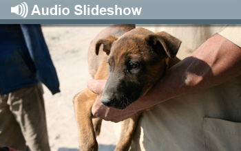 Photo of dog in arms and the words Audio Slideshow
