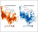 Maps of the Midwest showing landscape simplification on left and relative insecticide use on right.