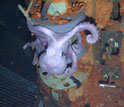 Photo of life around a deep sea hydrothermal vent.