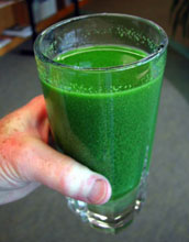 Glass of  green water from Lake Erie during the algae bloom.
