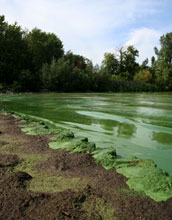 Photo of the Lake Erie shore with algae bloom in 2011