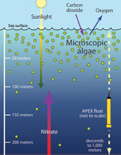 Illustration showing how algae in surface waters depends on deep water nitrate.
