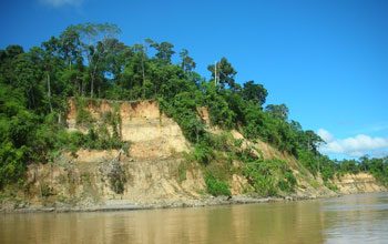 Photo of a river bluff which is used as a sampling location, in the Peruvian Amazon.