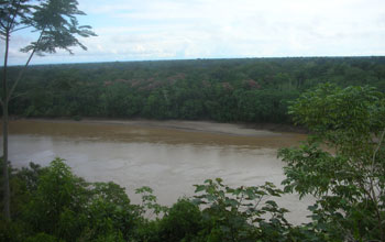 Photo taken from a river bluff of the Madre de Rios River in Peru.
