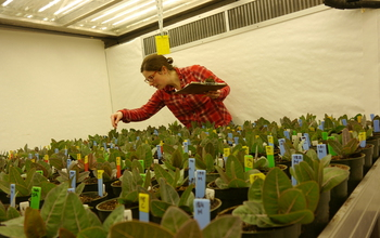 Researcher Amy Hastings collects data on milkweed.