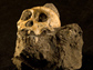 Photo of skeletal parts of two-million-year-old Australopithicus sediba, southern ape.
