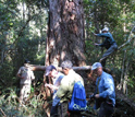 Photo of researchers taking a tree core from Fokienia tree in Vietnam.