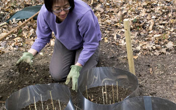 Biologist Jean Tsao readies a research tick garden