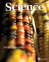 Cover of the Nov. 20, 2009, issue of Science magazine.