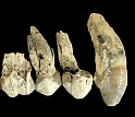 Teeth at Middle Awash, Ethiopia, come from Australopithecus anamensis.