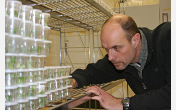 Louis Hesler examines a colony of rare nine-spotted ladybugs being raised in captivity.