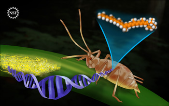 An aphid and fungus are linked by a DNA strand. This DNA is responsible for producing carotenoids.