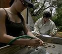 two citizen scientists sort archaeological pieces