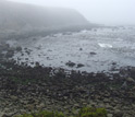 Photo of ocean acidification study field site at Fort Ross, California, on a foggy day.