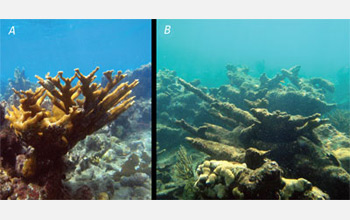 Photos of a healthy coral reef on left and a coral reef degraded by acid waters on right.