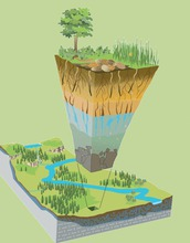 illustration showing earth layers and vegetation sectioned out of a landscape