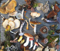 A selection of fungi displayed on a table