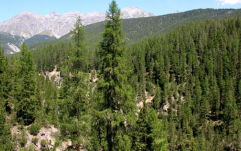 Image of a forested area in a mountenous zone.