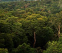 Tropical forests in the Amazon