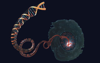A drawing depicting a DNA molecule unwinding from a chromosome inside the nucleus of a cell.