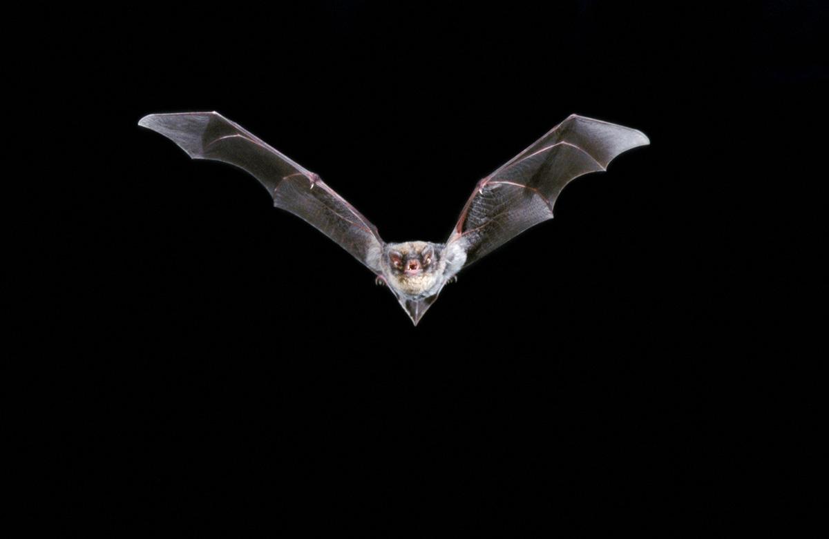 Bats Northwest