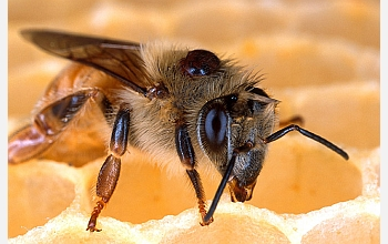 The 1 million neurons in the brain of a honey bee control and array of complex social behaviors.