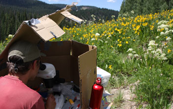 Scientist Berry Brosi removes pollen from bumble bees in a field in Gunnison County, Colo.