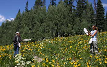 Researchers sample bumble bees in a subalpine meadow in Colorado.