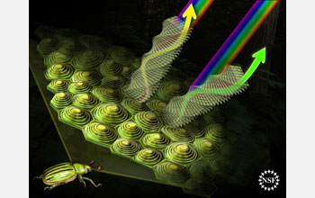The structure of jewel beetle cells results in striking colors as light hits them from angles.