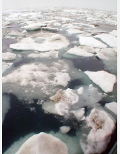 Arctic ice conditions have major impacts on sea creatures and those who subsist on them.