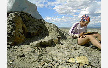 Photo of Ellen Currano collecting fossil leaves in Wyoming's Bighorn Basin